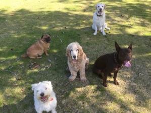 Stara, Maddie, Archie, Sam and Fletcher