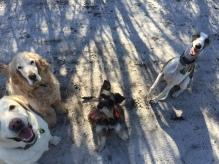 Tink, Kobe, Meg and Sam