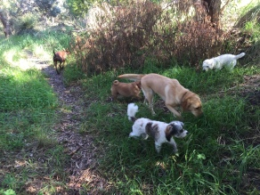 Stara, Maddie, Archie, Pippa and Fletcher