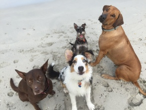 Hunter, Kobe, Sandy and Fletcher