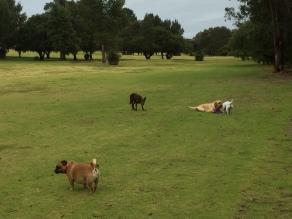 Stara, Maddie, Archie and Fletcher