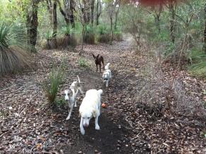 Tink, Pippa, Meg and Fletcher