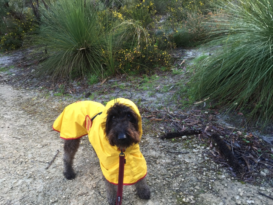 Timmy in smart raincoat