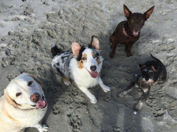 Hunter, Kobe, Meg and Fletcher