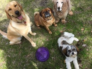 Stara, Max, Sam and Pippa
