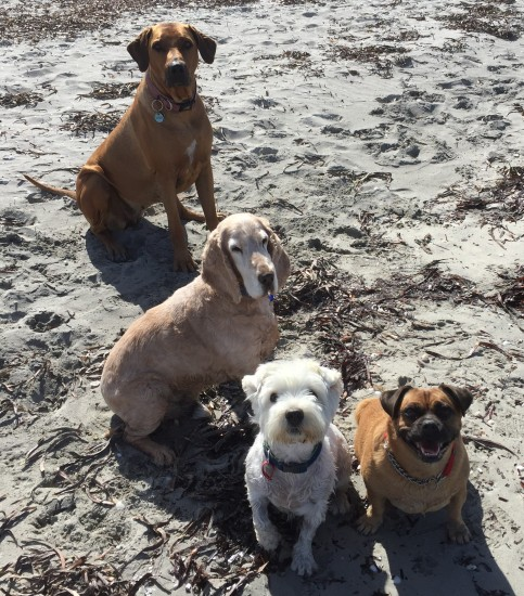 Sandy, Sam, Archie, Maddie